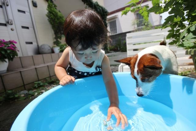 夏休みの自由研究遊びながらできる水の実験♪