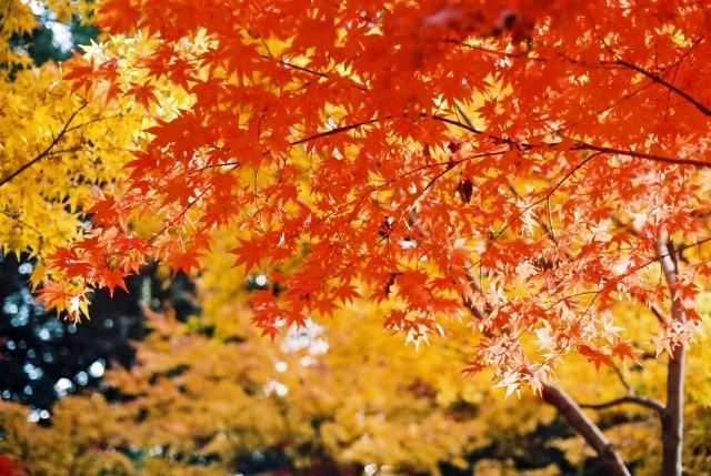 京都嵐山の観光スポット!紅葉の見ごろは?