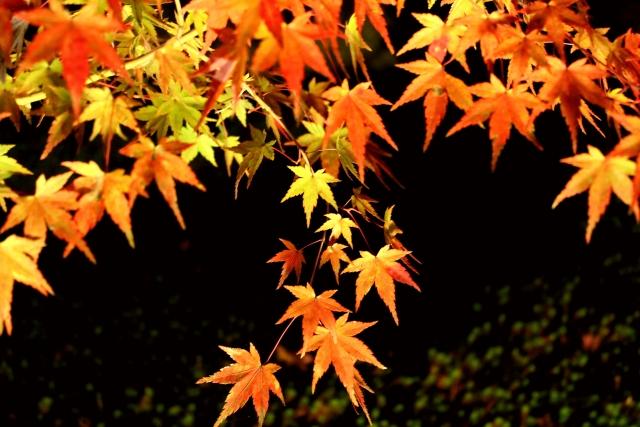 京都の紅葉のライトアップ!清水寺をはじめとする人気スポット