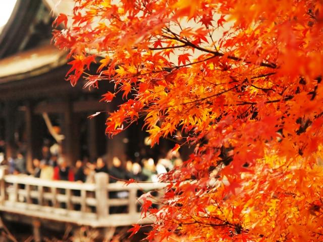 京都紅葉の見ごろ2015!ライトアップ